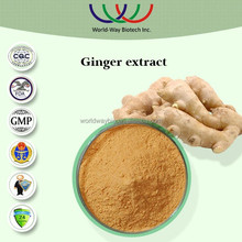 China manufacturer supply free samples high quality zingiber officinale dry ginger extract