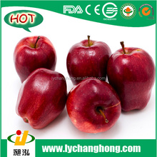 [HOT] fresh apples red delicious /fruit apple red delicious