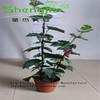Artificial grape vine