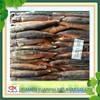 export whole round frozen ( Argentinus Squid )illex Squid