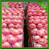 Chinese red qinguan apples exporter big qinguan apples factory