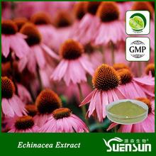 wholesale chicoric acid extract echinacea powder