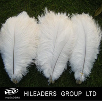 Wholesale Decorative Bleached White Ostrich Feather