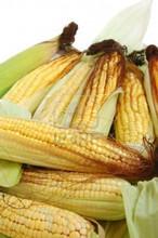 Yellow Corn Animal Feed FOR SALE