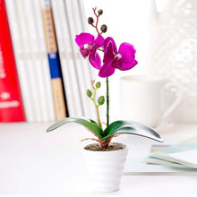 2 Jefes Mini Artificial Bonsai, Butterfly Orchid