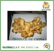 2015 chinese fresh mature ginger