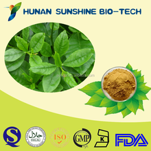 High quality with reasonable price medicine for sexual power panax ginseng extract 80% Ginsenoside