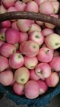 16kg carton Gala Apple
