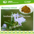 secas folhas de alecrim extrato de alecrim rosmarinus officinalis