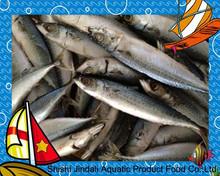Board frozen pacific mackerel BQF whole round dried mackerel fish