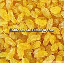 cherry tasty good quality turpan raisin