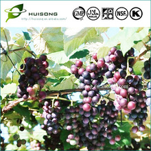 Grape Seed Extract Softgel Capsule For Skin