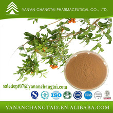 Herbal extract GMP Factory supply Guava Leaf Extract 10:1 supplier