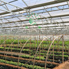100% virgin Bayer polycarbonate greenhouse siding parts cover