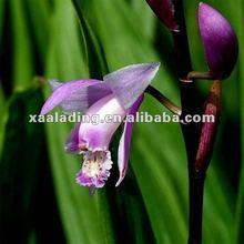 hovenia dulcis thunb extract