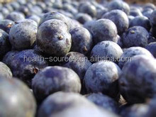 Food grade Acai berry extract, help fitness enthusiast get in shape and build muscle