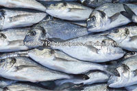 probiotic feed additive for aquatic animals