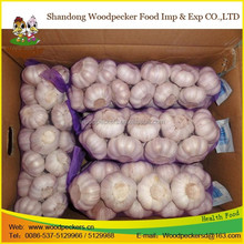 Super grade red purple Indian garlic
