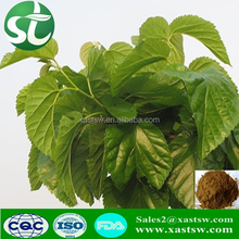 High quality pure Mulberry Leaf Extract Powder| Mulberry Leaf Extract|1-Deoxynojirimycin(DNJ) for supplement active ingredients