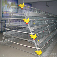 Poultry farming cages in kenya