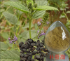 Natural chinese herbal Psoralea corylifolia Linn. extract,Psoralea corylifolia Linn. powder