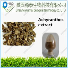 Supply free sample natural Achyranthes Bidentata Extract powder
