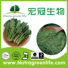 Dried spinach / dried spinach leaves / dehydrated spinach powder