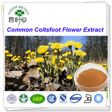 5:1 10:1 20:1High Quality pure natural Coltsfoot Flower Extract powder