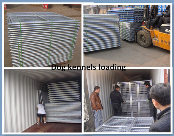 Dog kennels loading.jpg