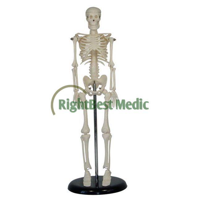 Mini Plastic Artificial Human Skeleton Model Anatomy Skeleton