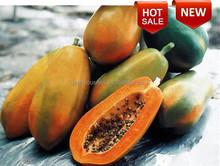 PA01 Elegant good quality hybrid bulk planting papaya seeds