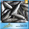 Carton or Woven Bag Packed 18 months Shelf Life Fresh Frozen Bonito Sea Fish
