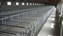 single pig cage used in farm ranch feeding system