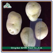 2015 Chinese Fresh Holland Potato Hot Sale