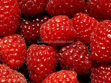 100% pure organic bio factory direct raspberry extract fructus rubi p.e.