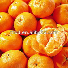 Chinese fresh tangerine/mandarine orange/citrus fruit
