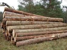 Oak, beech, spruce, pine round logs