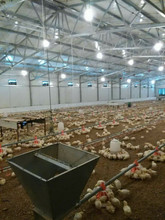 Controlled Poultry equipment/Broiler farm/Chicken pen