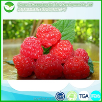raspberry seed extract for loss weight