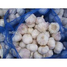 2012 crop chinese cold store fresh garlic