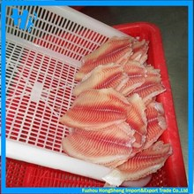 New stock frozen tilapia fish fillets