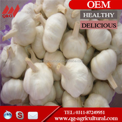 2015 best quality natural garlic in mesh bag sale