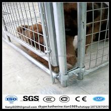 galvanized unique iron fence steel welded wire dog kennels