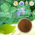 Fructus viticis extrato usado para analgésico anti- bacteriano