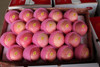 Fruit Apples Fuji Apple for sale