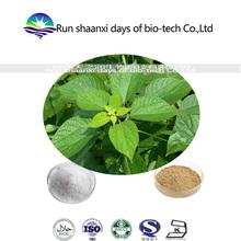 herbal medicine extract radix boehmeriae Extract ramie root Extract