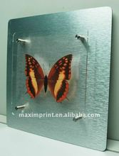 """Hot sale"""""""" Metal Wall art With Photographic printed butterfly on plexiglass board"""