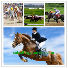 Customized Horse Leg Wrap Cohesive