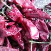Good frozen pepper EXPORTED