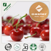 100% pure spray Dried 25% Vitamin C Natural Acerola Cherry Extract/ Malpighia Glabra
